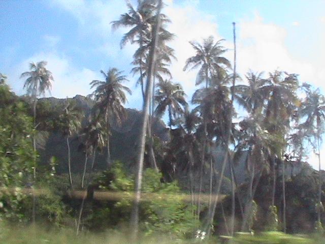 Hawaii08 010