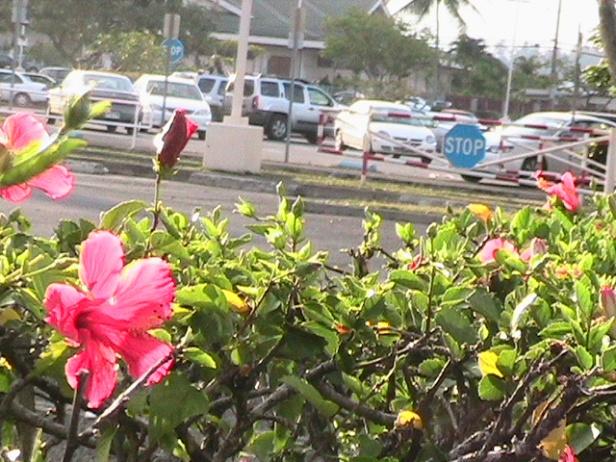 Hawaii08 018