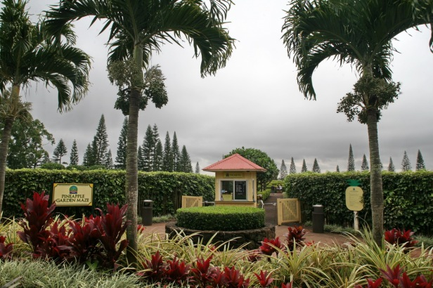 Pineapple_Garden_Maze_(2858310906)