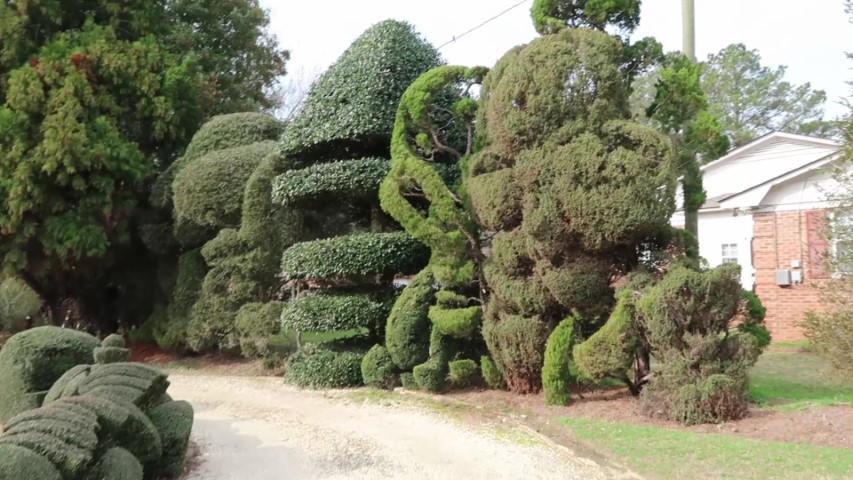 Fanciful hedges