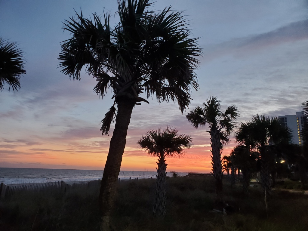 Palm trees as the sun sets at Myrtle Beach